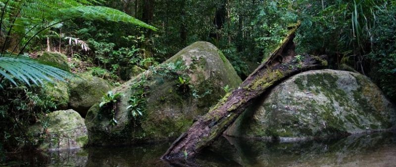 Daintree Rainforest Observatory requires high quality wastewater treatment