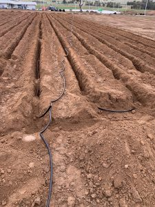 The subsurface drip irrigation is installed at a specific depth below the ground and in regular lines to ensure even and effective dispersal of the treated effluent.