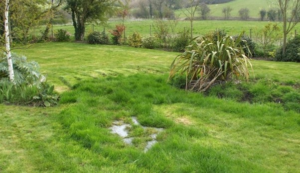 Wet Patches And Very Green Grass Can Be A Sign Of A Failing Onsite Sewage System That Needs Replacing